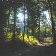 Shinrin-Yoku: An Effective Ecotherapy for Drug Rehab, Alcohol Treatment, and Addiction